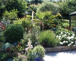 Paysage de Provence - Tarare - Plantation